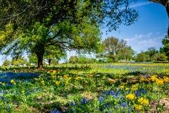 Un bello campo ricoperto con vario Texas Wildflowers fotografie stock