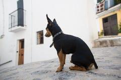 Un bello cane casalingo sveglio immagine stock