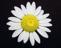Un bello fiore Fotografia Stock Libera da Diritti