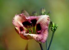 Un bello fiore. immagine stock libera da diritti