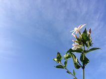 Un bello fiore bianco fotografia stock libera da diritti