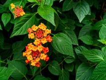 Un bello fiore con le foglie verdi fotografia stock libera da diritti