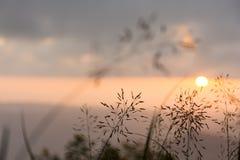 Un bello fiore dell'erba con la luce del sole Immagine Stock