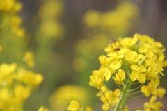 Un bello fiore della violenza Fotografie Stock Libere da Diritti