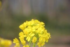 Un bello fiore della violenza Fotografia Stock Libera da Diritti
