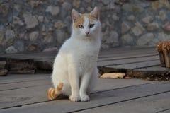 Un bello gatto Fotografia Stock Libera da Diritti