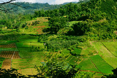 Un bello giacimento del riso immagine stock libera da diritti