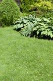 Un bello giardino abbellito con varie piante perenni ed a Fotografia Stock Libera da Diritti