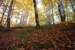 Un bello giorno di autunno nella foresta Fotografie Stock Libere da Diritti