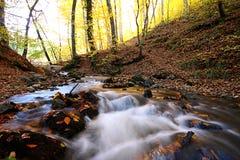 Un bello giorno di autunno nella foresta Immagini Stock