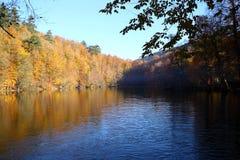 Un bello giorno di autunno nella foresta Fotografia Stock