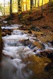 Un bello giorno di autunno nella foresta Immagine Stock