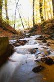 Un bello giorno di autunno nella foresta Immagine Stock Libera da Diritti