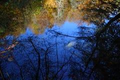 Un bello giorno di autunno nella foresta Fotografia Stock Libera da Diritti