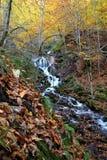 Un bello giorno di autunno nella foresta Immagini Stock Libere da Diritti