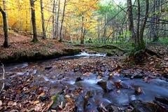Un bello giorno di autunno nella foresta Fotografie Stock