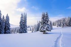Un bello giorno gelido fra le alte montagne sono gli alberi magici coperti di neve lanuginosa bianca contro il paesaggio dell'inv Immagine Stock Libera da Diritti