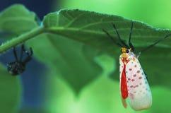 Un bello insetto su una foglia Fotografia Stock Libera da Diritti