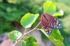 Un bello lepidottero fotografia stock libera da diritti
