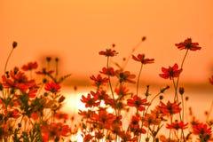 Un bello letto di fiori dell'universo e viste del lago Fotografia Stock