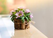 Un bello mazzo con la margherita sul tavolino da salotto nella stagione estiva Fotografia Stock Libera da Diritti