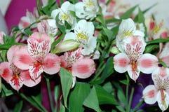 Un bello mazzo di Alstroemeria dei fiori Macro Potete usare Fotografie Stock Libere da Diritti