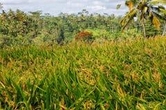 Un bello paesaggio in Bali Fotografia Stock