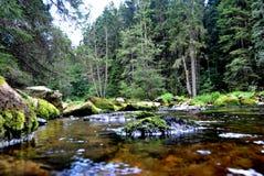 Un bello paesaggio con muschio ha coperto le pietre e le rocce circondate dagli alberi alti Fotografia Stock Libera da Diritti