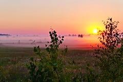 Un bello paesaggio della natura di un campo verde con i fiori avvolti in una foschia prima dell'alba con l'aumento del sole dietr Fotografie Stock Libere da Diritti