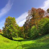 Un bello paesaggio della sorgente con erba verde Fotografia Stock Libera da Diritti