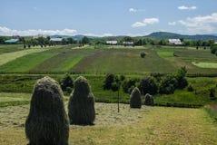 Un bello paesaggio di estate dei campi agricoli verdi con le case sui precedenti, Ucraina occidentale del villaggio e del fieno Immagini Stock Libere da Diritti