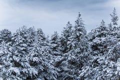 Un bello paesaggio di inverno nel nordico Europa Immagini Stock Libere da Diritti