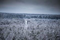 Un bello paesaggio di inverno nel nordico Europa Fotografia Stock Libera da Diritti