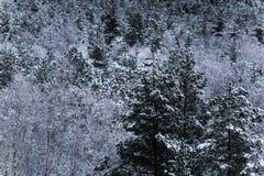 Un bello paesaggio di inverno nel nordico Europa Immagine Stock