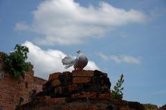 Un bello piccione bianco sulla colonna rovinata, Immagine Stock Libera da Diritti
