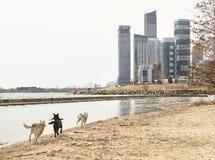 Un bello punto di vista di nuovi edifici e dei cani di Toronto che corrono a  fotografie stock
