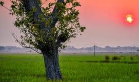 Un bello tramonto con ricciolo ed il campo di erba immagine stock