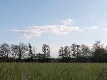 Un bello treeline nella distanza con una lacuna veduta dal po Immagini Stock