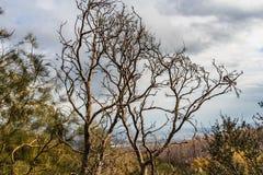 Un bello vecchio albero marrone ramoso fantastico senza foglie in un parco in autunno contro il cielo blu con le nuvole bianche e immagine stock libera da diritti