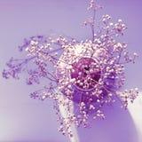 Un bello whith del vaso dell'argilla i fiori secchi Immagine Stock