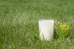 Un bicchiere di latte su erba verde fotografie stock libere da diritti