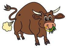 Un bio taureau brun qui mange l'herbe Photo stock