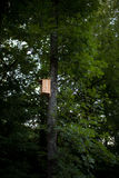 Un Birdhouse dans la neige Image libre de droits