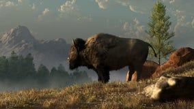 Un bison américain illustration stock