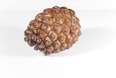 Un blanc de cône de pin de Brown d'isolement Photos stock