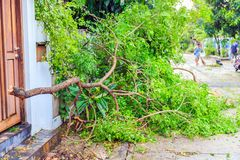 Un bloque de la caída de las ramas de árbol la puerta Fotos de archivo libres de regalías