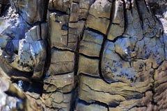 Un bois carbonisé dans une coupe Bois roussi par le feu photos stock