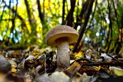 Un boleto joven alto y hermoso en un bosque mezclado Imagen de archivo