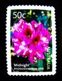 Un bollo stampato in Australia mostra un'immagine del fiore di mezzanotte 1978 di rosa del rododendro sul valore al centesimo 50 Immagini Stock