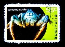 Un bollo stampato in Australia mostra un'immagine del ragno di salto sul valore al centesimo 55 Immagine Stock